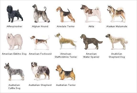 Rasy Psów :: Opieka nad zwierzętami