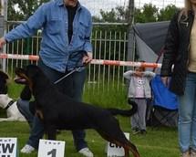 National Dog Show Bytom 16months
