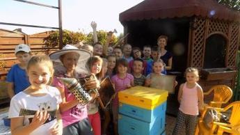 Klasa IV wśród pszczół
