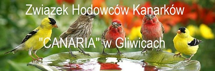Związek Hodowców Kanarków CANARIA Gliwice