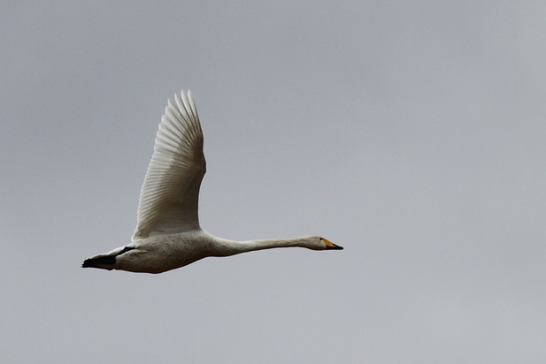 5/01/2012, 400mm, f/7.1, s.500, iso 640
