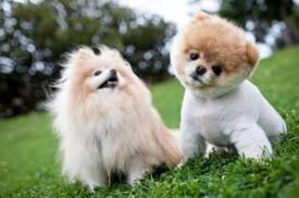 Psy Domowe Małe Rml73 Usafrica