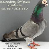 Brodawczak pl.-niebieski z pasami