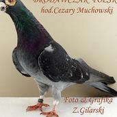 Brodawczak pl.