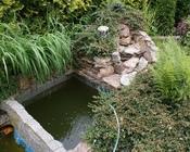 Przerośnięte rośliny oraz zepsuta kaskada przed zmianą