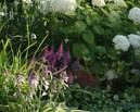 Rabata w cieniu z królową - hortensją i malowniczym grujecznikiem.