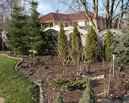 Przed metamorfozą ogród zdominowany był przez iglaki.
