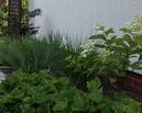 Ogród rok po metamorfozie.