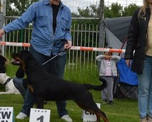National Dog Show Bytom 16months