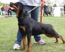 National Dog Show Zabrze 15months