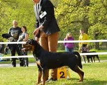 ELENA na Klubowej Wystawie  Rottweilerów