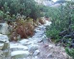 Na szlaku - Dolina Roztoki.