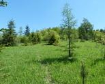 Storczykowe pole.