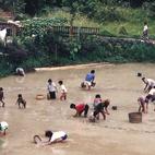 Indonezja i niełatwa praca w polu ryżowym