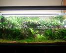Paludarium hydroponiczne 240 litrów