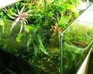 Paludarium hydroponicze 40 litrów