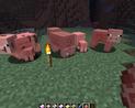Swinie