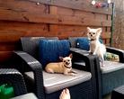 Chihuahua