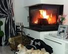 Chihuahua - relax