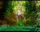 Gaia - album cover