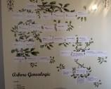 Bran - Vlad Drakula - drzewo genealogiczne