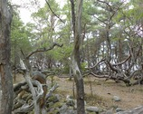 Rezerwat Trollskogen, czyli Las Trolli