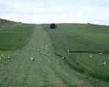 Przez łąki i pola