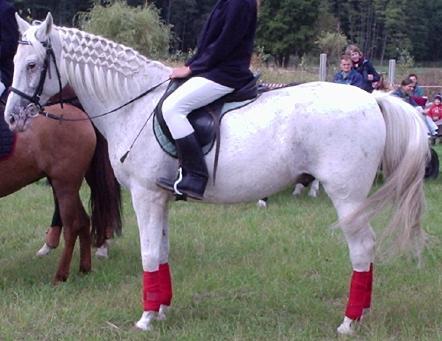 Pielęgnacja Konie