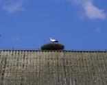 Bocian przyleciał 4.04.2012 o godz 15.20