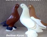 Berliński krótkodzioby