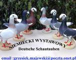 niemiecki wystawowy