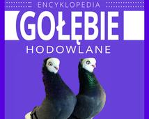 ENCYKLOPEDIA - GOŁĘBIE HODOWLANE