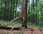 Ruskie Góry Drzewo