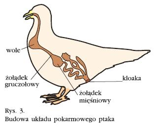 Ptak Pets24 Innym Okiem
