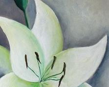 Evanescence lilium,60x40,14.07.2015r.