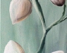 Kwitnące magnolie , 100x20, 02.03.2015r.