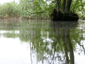 Rezerwat,Staw Jeleni