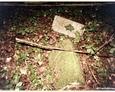 Ewangelicki cmentarz w Czarnej Dąbrówce