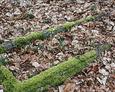 Kamienna rama mogiły na cmentarzu w Nowęcinie