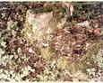 Cmentarz w Kozinie - pozostałości kamiennego ogrodzenia oraz nagrobków