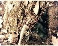 Fragment płyty nagrobnej na cmentarzu w Małoszycach