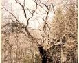 Stare drzewo to znak, że jesteśmy na miejscu
