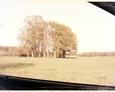 Ta ciekawa kępka drzew na polu również zwróciła naszą uwagę