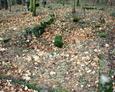 Pozostałości ogrodzenia grobu rodzinnego