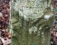 Fragment kamiennego postumentu w kształcie pnia drzewa z widoczną sygnaturą jego twórcy