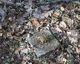 Kamienny fragment pochodzący z ogrodzenia