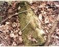 Cewice - pozostałości cmentarne w okolicy cmentarza