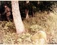 Cewice - eksploracja terenu przycmentarnego