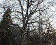 Wszędzie otaczały nas stare, powykręcane drzewa