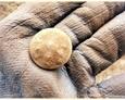 Tereny Pogorzelic - pierwszy ze znalezionych guzików (guzik brytyjski i Wspólnoty Narodów (Commonwealth) - ogólnowojskowy z herbem państwowym)